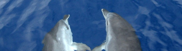 Artikelbild Delfine
